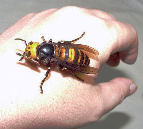 funny-nope-moment-giant-wasp